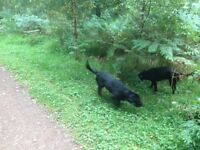 Paw Patrol Home Boarding / Walking