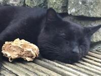 MISSING/LOST BLACK CAT