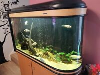 Bullet style big fishtank+ fish+ fx6 filter+led light