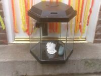 FISH TANK WITH LID PUMP FILTER ALSO AIR PUMP £25