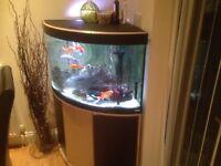 Corner fish tank Valencia 190