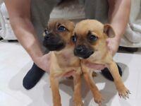 Two boy jugs puppy