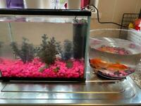 2 fish tanks £10