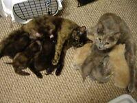 Various Kittens.