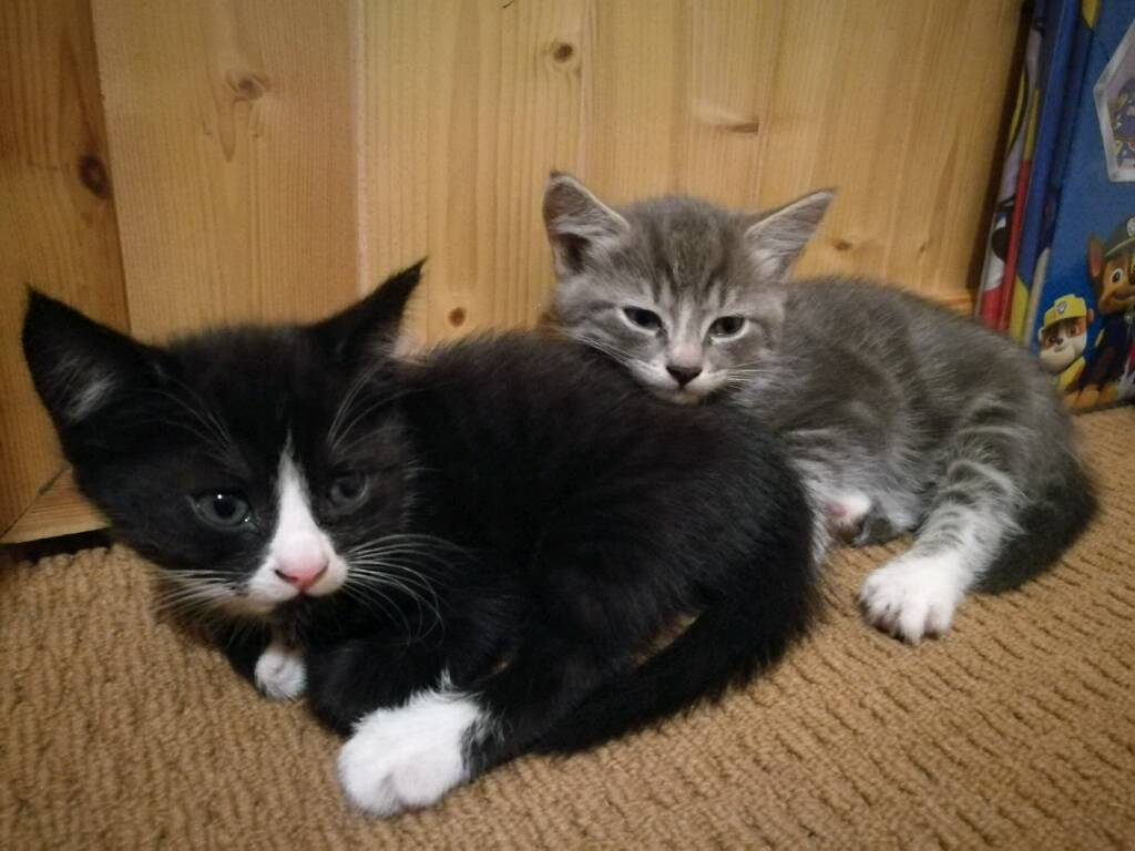 3 adorable female kittens for sale