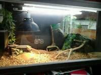 Reptile tank and dragon