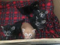 3 Adorable kittens for sale