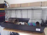 Guinea pigs x2 / hutch / indoor cage / outdoor run