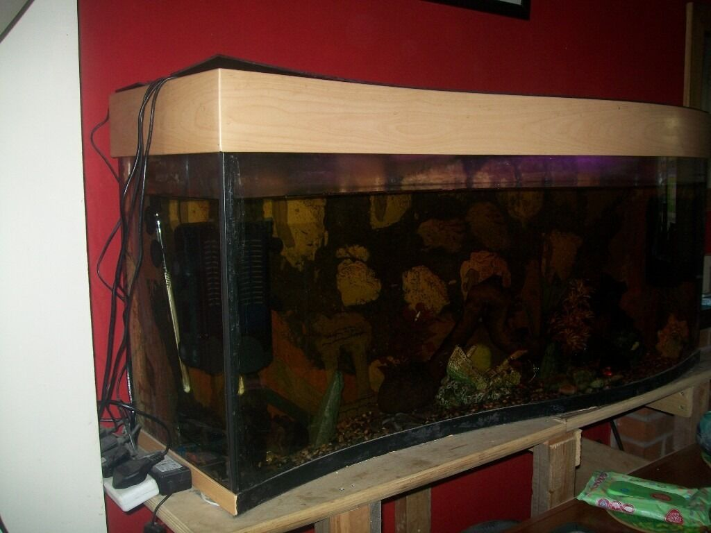 Fish tank in york - 4 Foot Tropical Fish Tank