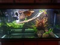 400 litre fish tank for sale