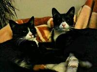 FREE two male cats