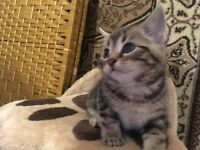 Selling four kittens