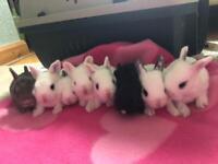 Beautiful Bunnies (2 for 50)