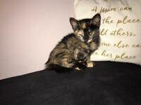 3 beautiful kittens left