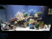 Juwel 125 aquarium (marine/tropical)