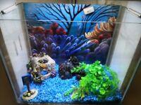 Super fish home 40