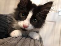 Kittens need rehoming ASAP