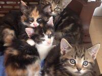 5 Kitten for salle