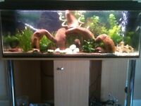 Lovely 4 ft Aquarium with Stand