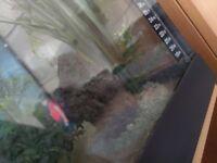 3ft fish tank, unit & all accessories