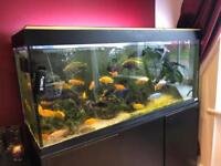 Fluval Roma 240 Aquarium Plus Extras