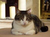 Missing Tortoiseshell Male Cat