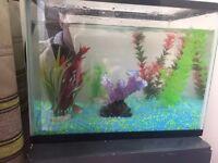 2 fishs and fish tank