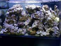 Live rock and dry rocks for marine aquarium