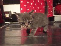 Stunning Kittens ready now