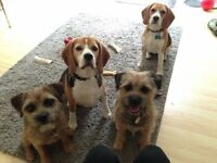 Dog Walker - Experienced and Insured (Caversfield and North Bicester)