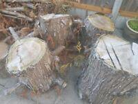 Wood tree bark