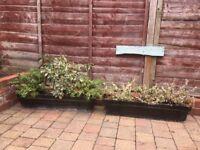 Window sill box planters X2 80cm each