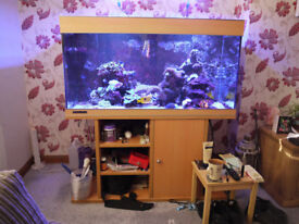 455 Litres (100 Gallons) Marine Fish Tank with stand