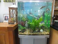 Aqua one 620 T Fish Tank