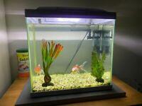 Superfish Start 30 Tropical Aquarium with 2 Fish, Complete Starter Kit, Heater, Light, Filter