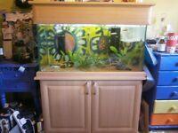 Full Aquarium Set-Up needs a new home!