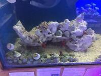 Marine fish tank clean up crew, snails, shrimps, crabs