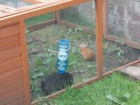 outdoor run for rabbits chickens guinea pigs