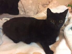 4 Kittens in need of new homes (all black & black & white)