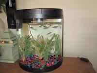 fish tank and 9fish and pump led lighting