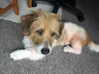 Cross breed Dog