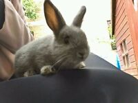Very Cute Rabbit Bunny 9 Week Old