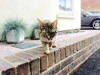 Cat 3 yrs old for a loving home