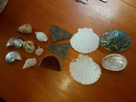 Collection of shells and fossils.