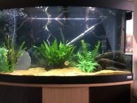 Fluval fish tank and stand full set up