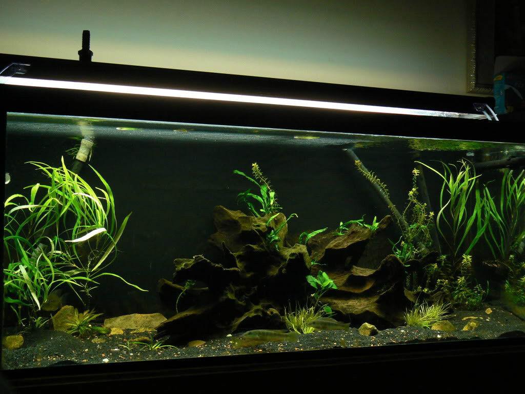 Natural Black Aquarium Gravel