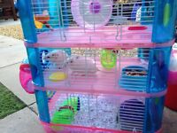 Four pet mice and cage