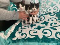 Sorry sold, 3 Beautiful and Playful kittens