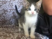 Kittens for sale 8 weeks old beautiful colours