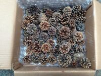 Box of Dried Pine Cones
